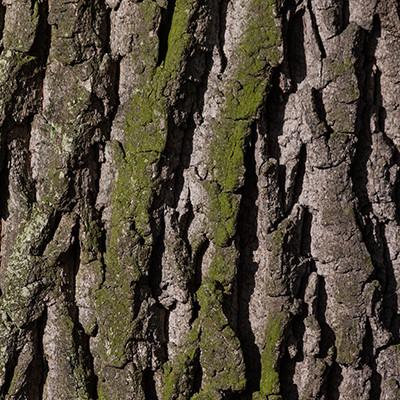 product-bark
